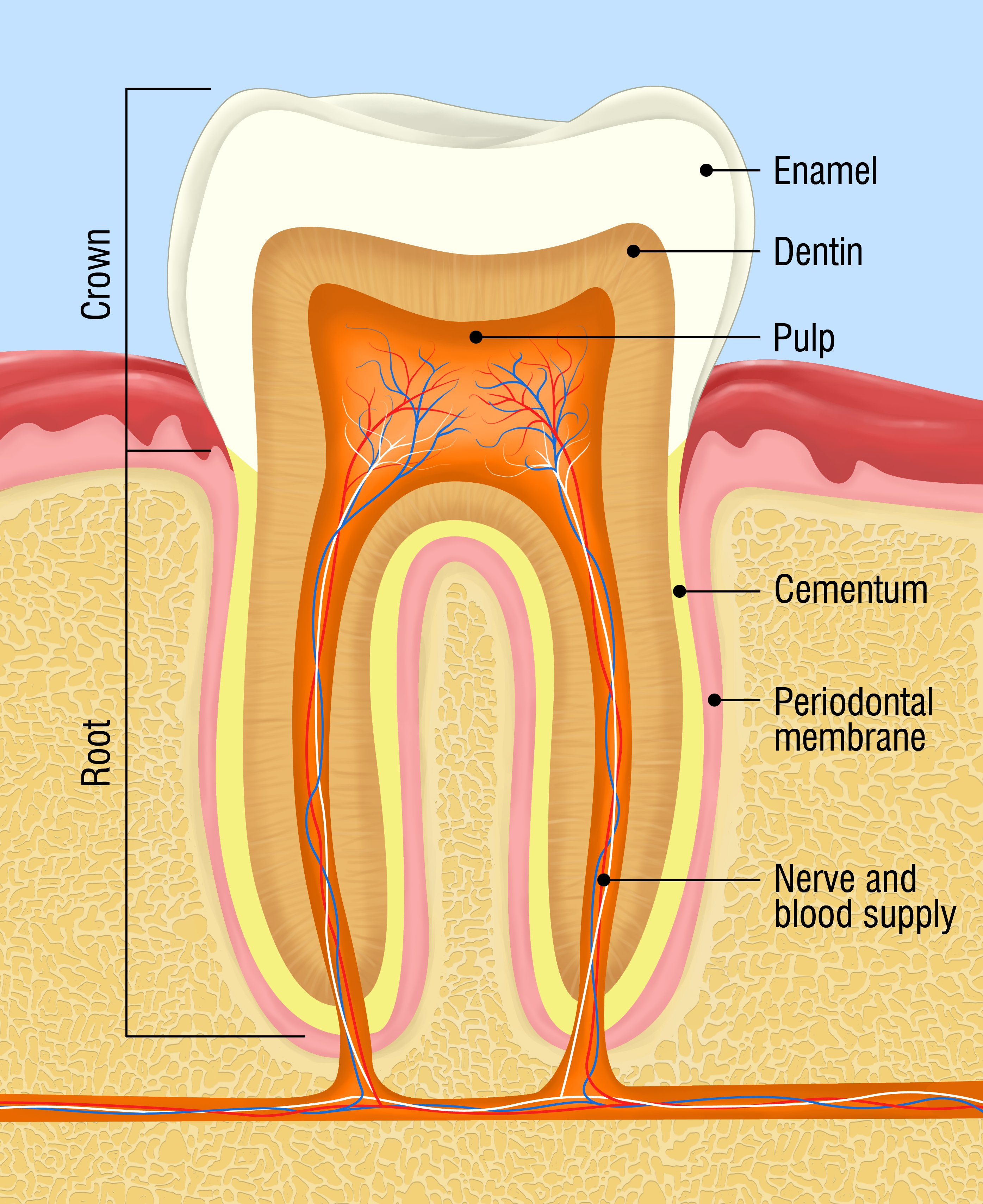 What Is A Root Canal Bradford Family Dentistry