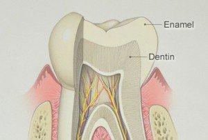 how tooth enamel is worn away bradford family dentistry