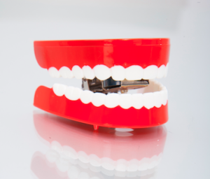 How do teeth function? - Screen Shot 2016 12 28 at 11.05.15 AM - Bradford dentist